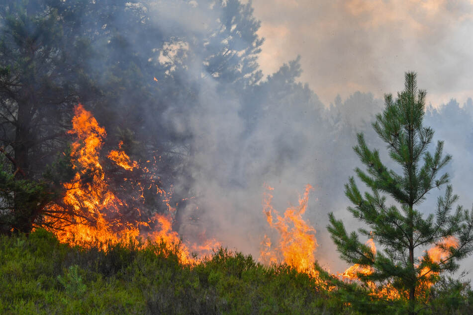 Vorsicht beim Grillen: In Baden-Württemberg ist die Waldbrand-Gefahr hoch!
