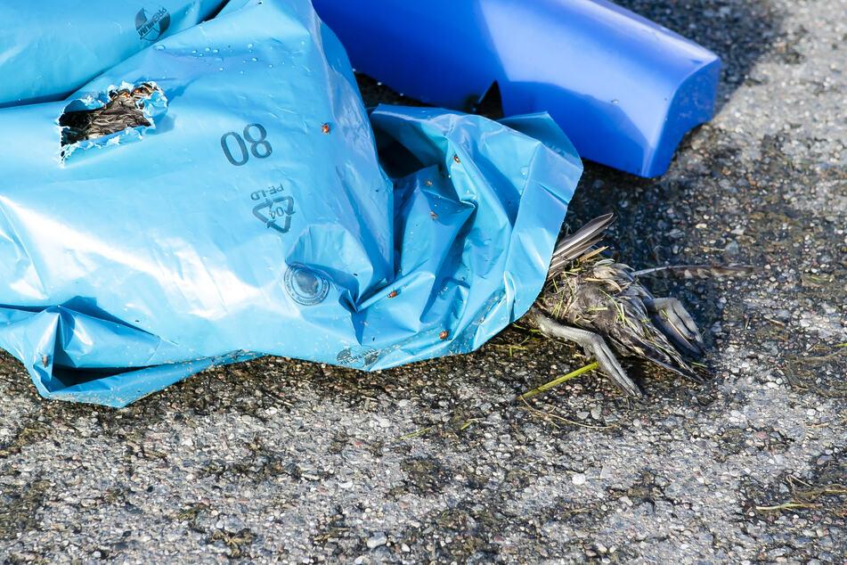 In NRW ist die Gefahr einer weiteren Ausbreitung der Geflügelpest noch nicht gebannt. Die Umweltministerin rief die Bürger auf, dem örtlichen Veterinäramt Funde verendeter Wasser- oder Greifvögel zu melden. (Archivbild)