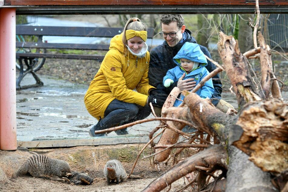 Jahreskartenbesitzer Patricia (31), Ben (32) und Linus (1) haben sich lange auf einen Zoobesuch gefreut.