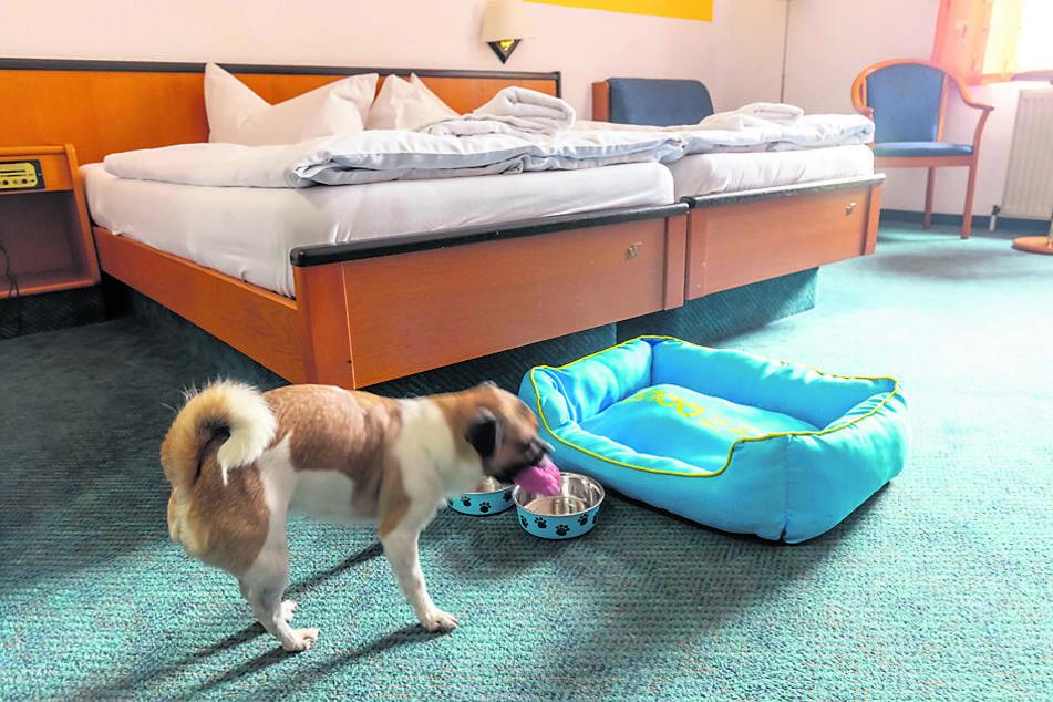 Große Betten für die Menschen und Schlafkörbchen für deren Hunde - das Berghotel möchte Hundebesitzern rundum-sorglos-Urlaub bieten.
