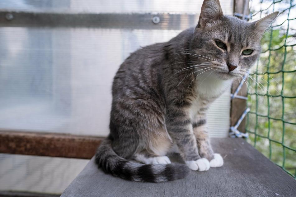 So einfach kannst Du Deinen Balkon katzensicher machen