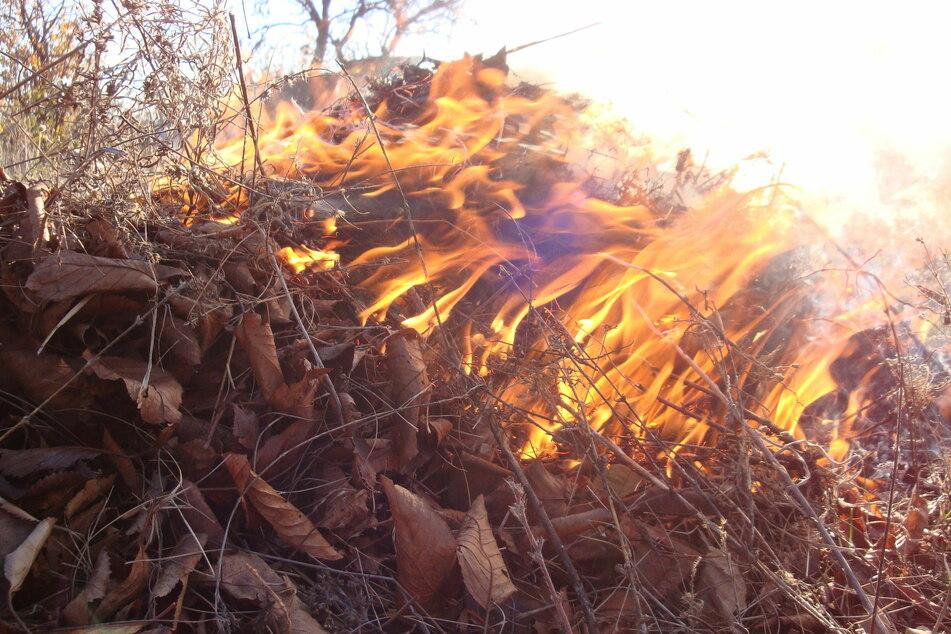 Darf man Laub und andere Gartenabfälle im eigenen Garten verbrennen?