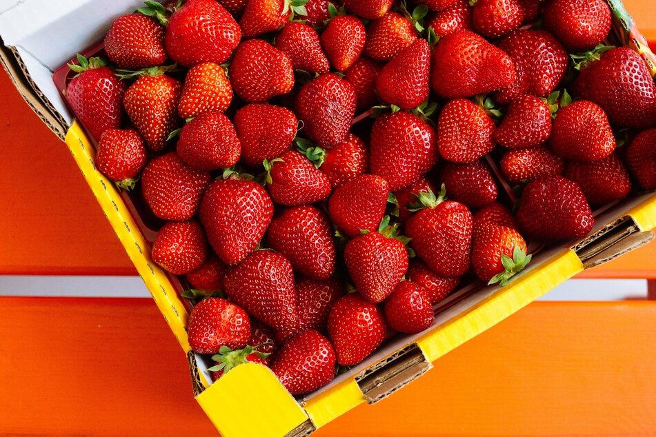 Gekaufte Erdbeeren sollten vorzugsweise in der Saison immer aus Deutschland stammen.