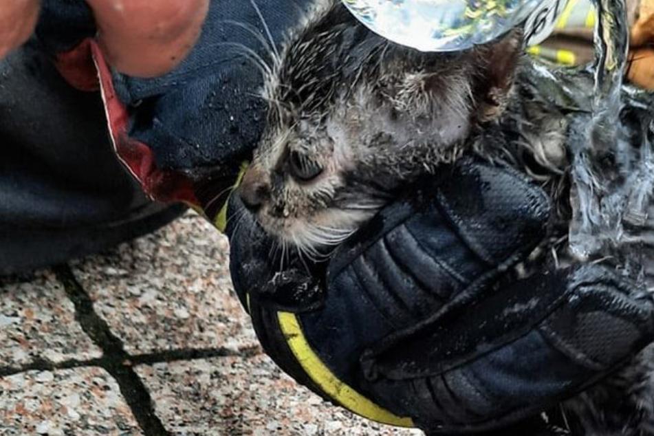 Tierischer Einsatz: Feuerwehr rettet zwei verletzte Babykätzchen