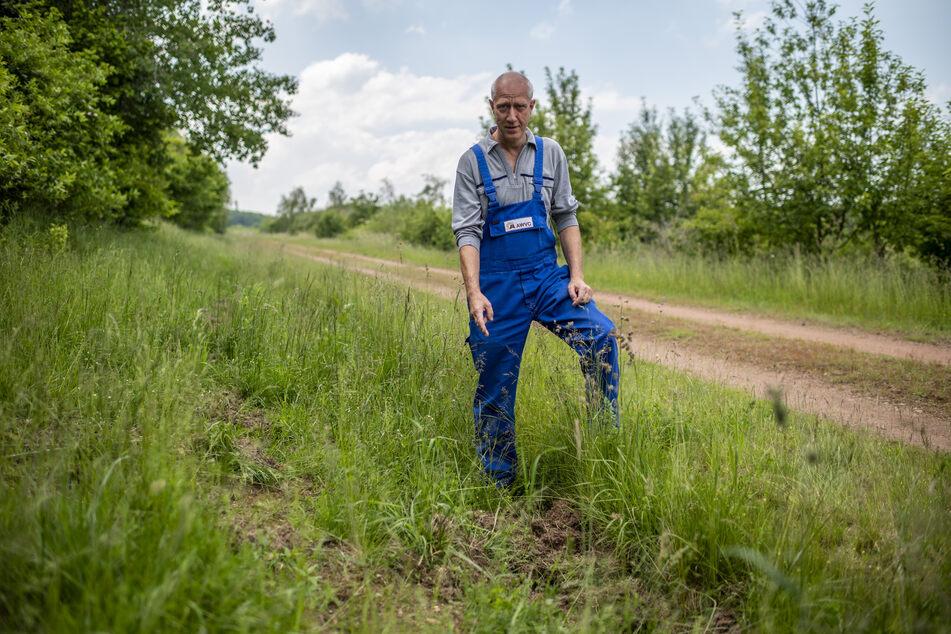 Findet immer wieder Wildschweinspuren auf dem ehemaligen Deponiegelände: Abfallwirtschaftsverbandsmitarbeiter Holger Enderwitz (55).