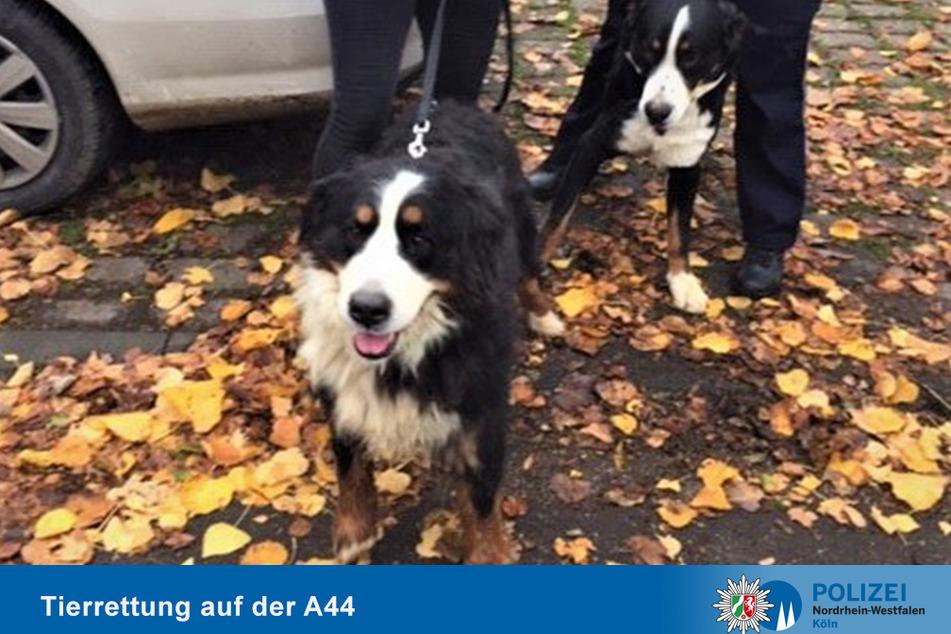 Tierisch riskant: Hunde büxen aus und machen A44 unsicher!
