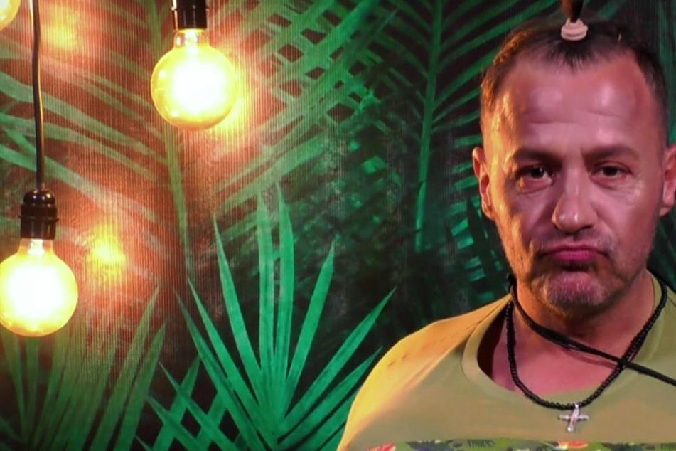"""Willi Herren (45) zog sich Kuchen durch die Nase und wurde zum """"erfolgreichsten Reality-Promi"""" (zumindest dieser RTLZWEI-Gruppe) gewählt."""