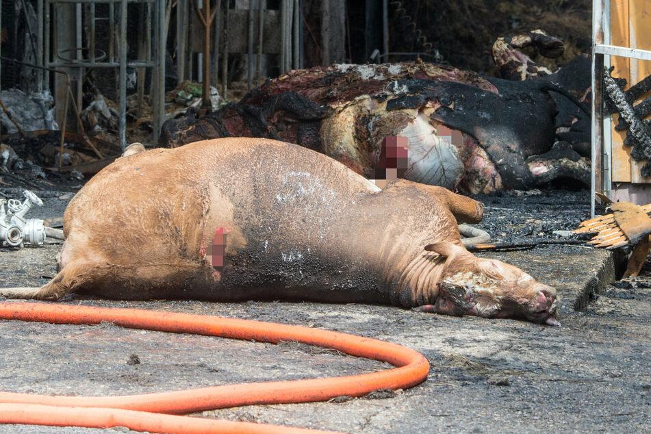 Acht Tiere wurden bei dem Großbrand getötet. (Symbolbild)