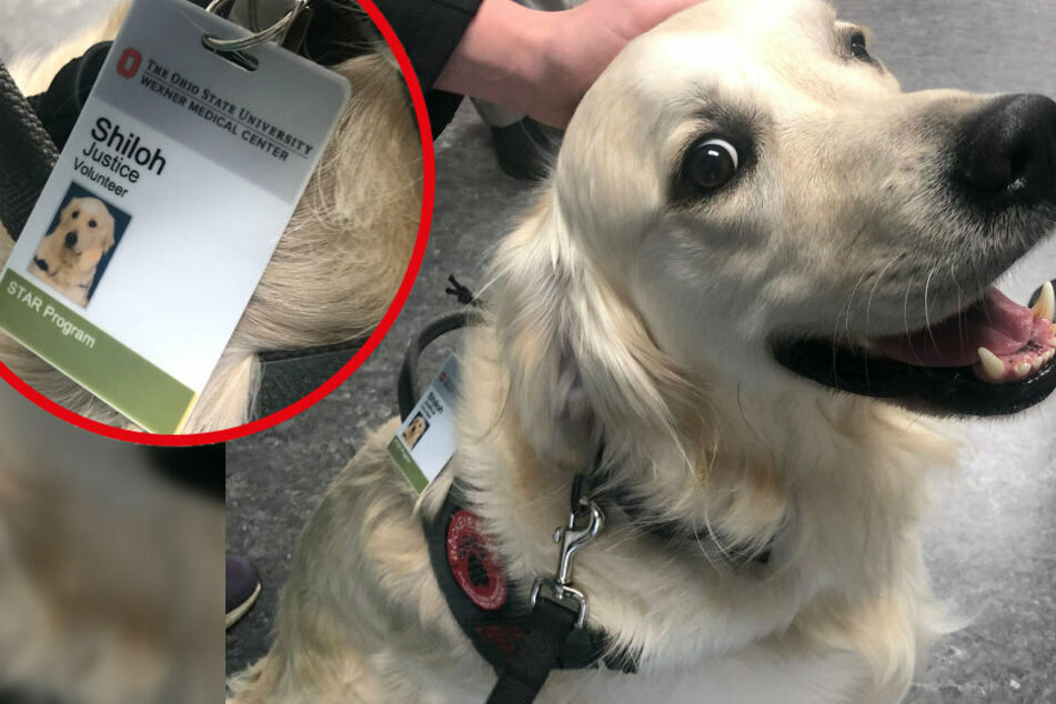 Shiloh's job is to put a smile on the faces of staff and patients.