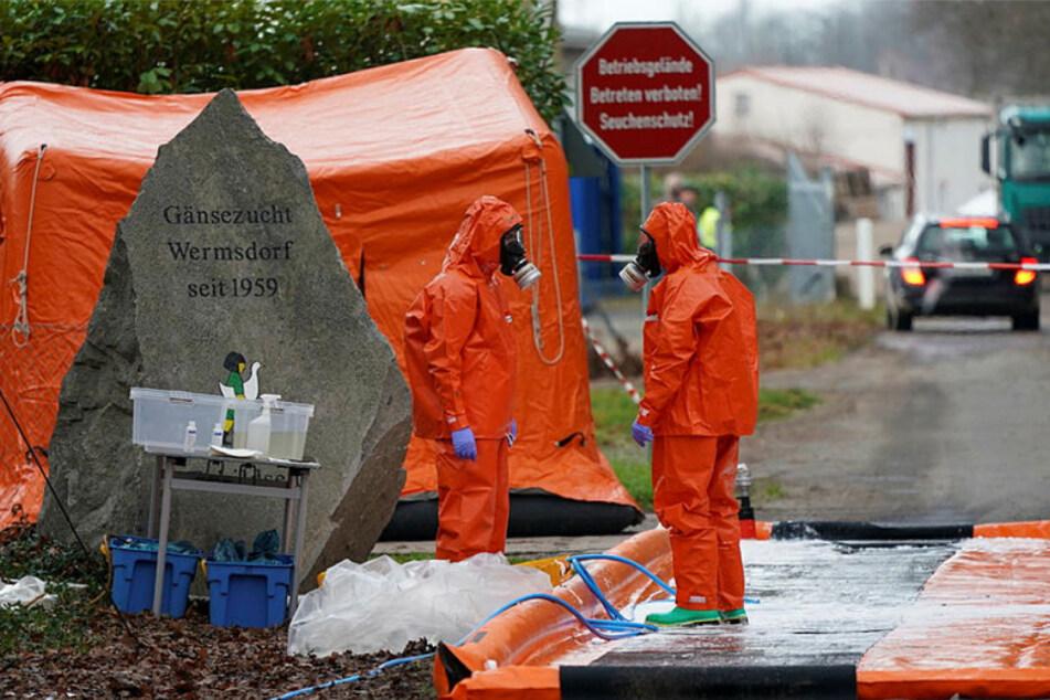 Feuerwehrleute in Schutzanzügen stehen am Eingang der Gänsezucht in Mutzschen - sie haben eine Dekontaminationsstrecke aufgebaut.