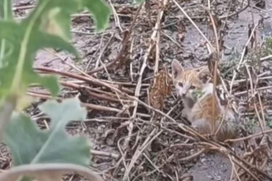 Baby-Katze kauert ängstlich und verletzt in Hinterhof, doch alle schauen weg