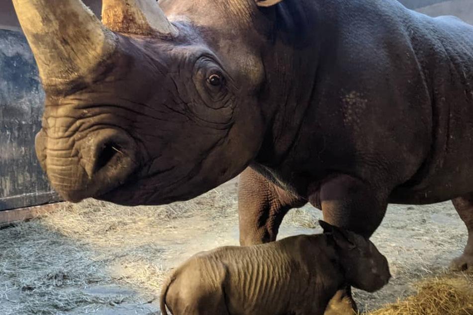 Mama Bibi and her baby boy.