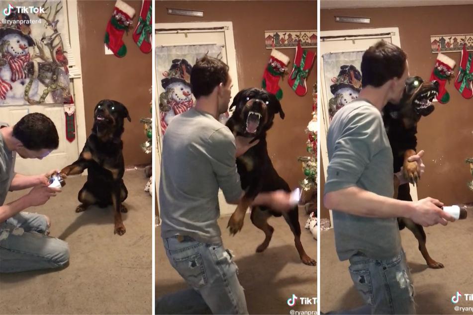 Ryan even tries giving the aggressive dog a kiss to calm him down.