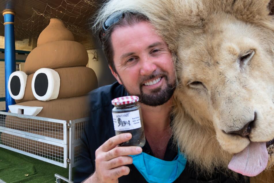 Dompteur stinksauer: Wirbel um Verkauf von Löwen-Kot in München