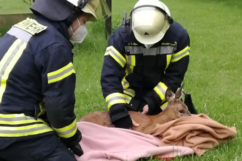 Einsatzkräfte der Feuerwehr wickeln das Reh in Decken.