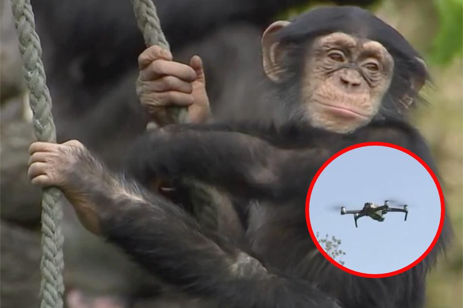 """""""Elefant, Tiger & Co."""": Die einen fühlen sich von Drohnen belästigt, die anderen von Zebras"""