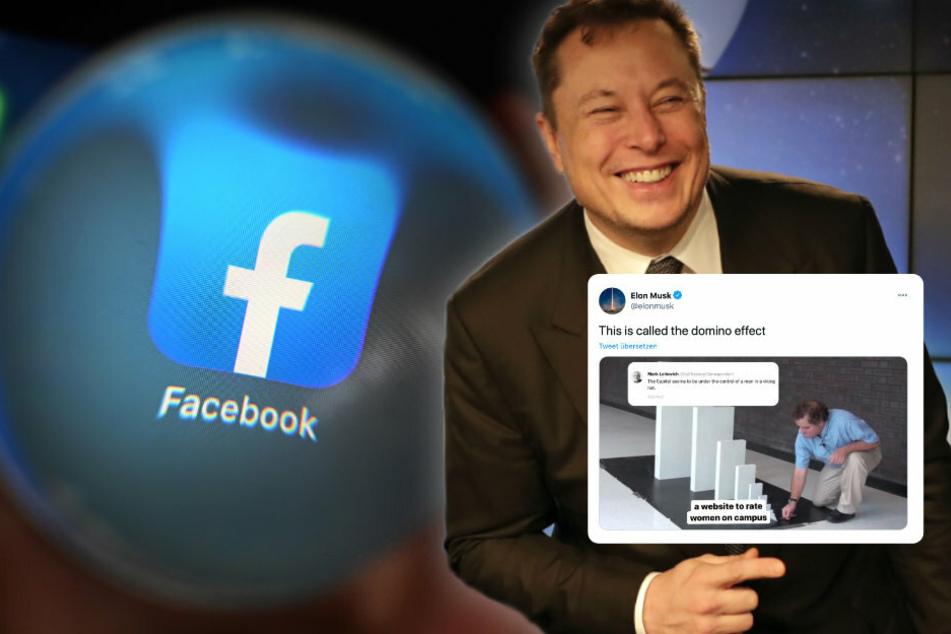 Elon Musk sorgt mit Dominostein-Tweet für Aufsehen: Er attackiert Facebook!