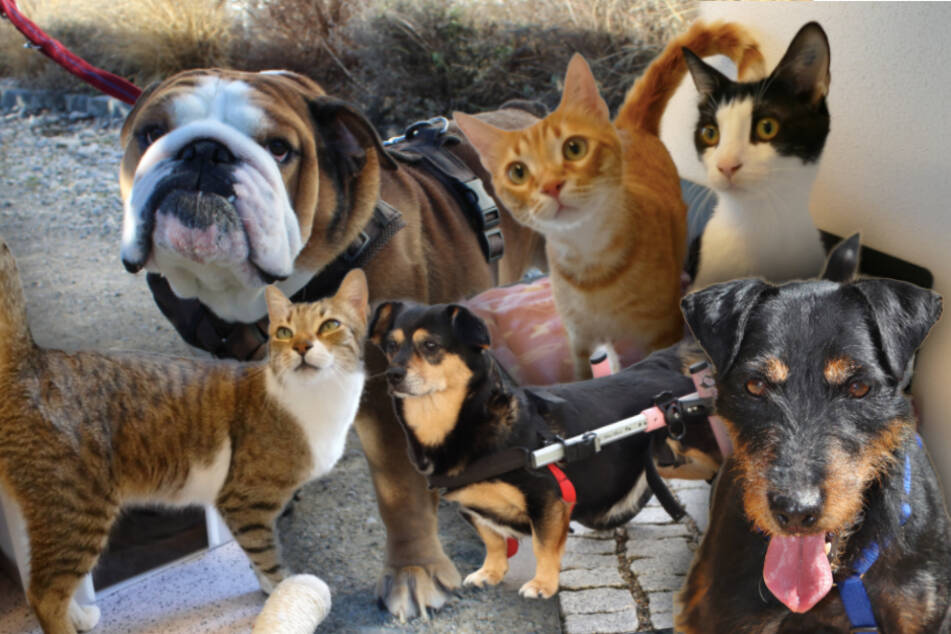 6 besondere Tiere: Diese Hunde und Katzen brauchen dringend ein Zuhause