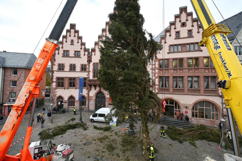 """Sorgt ein """"gerupfter"""" Österreicher trotz Corona für Weihnachtsstimmung in Frankfurt?"""