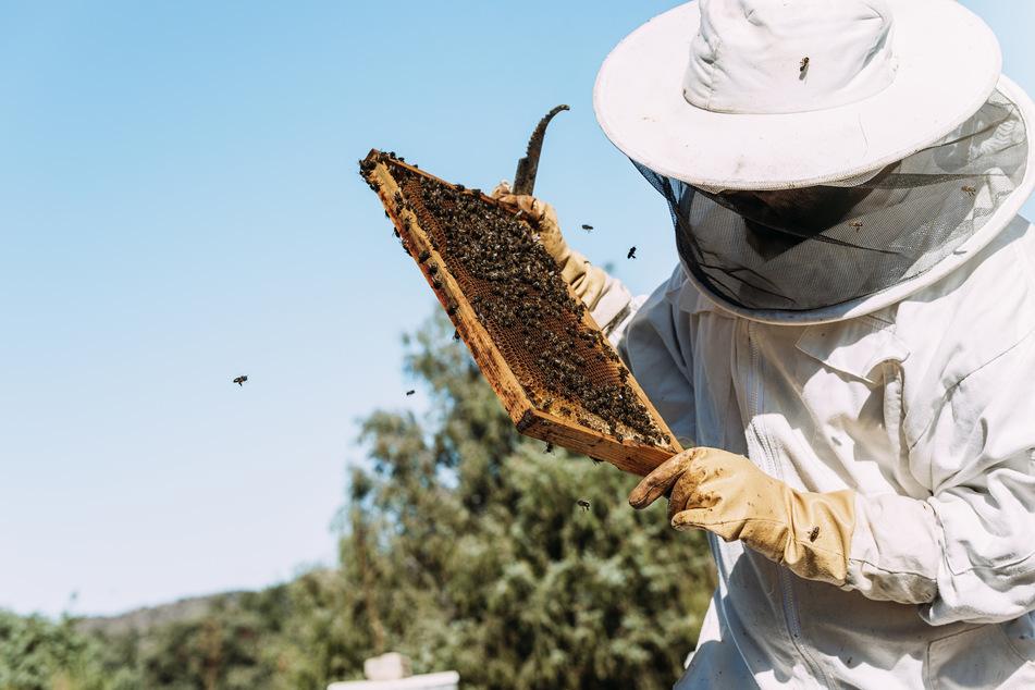 Der meiste Honig wird aus Spanien importiert. (Symbolbild)