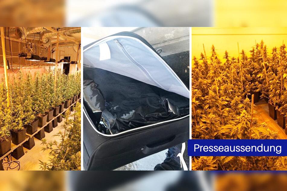 Eine professionelle Plantage mit 456 Gewächsen wurde nun von Polizisten dicht gemacht.