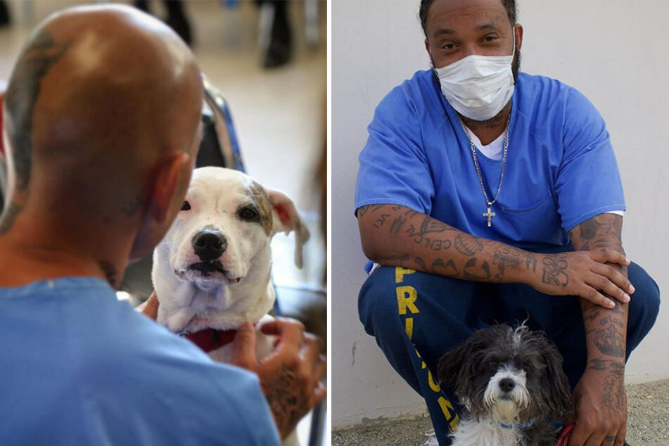 Participants in the Pawsitive Change Prison Program work with the rescue dogs for 14 weeks (collage).