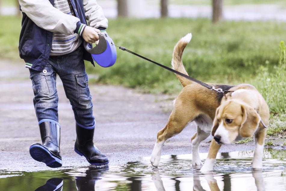 Kurioser Ausflug mit Hund: Zeugen rufen Polizei, die muss schmunzeln