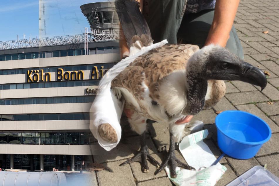 Seltener Vogel landet mitten am Flughafen Köln/Bonn!