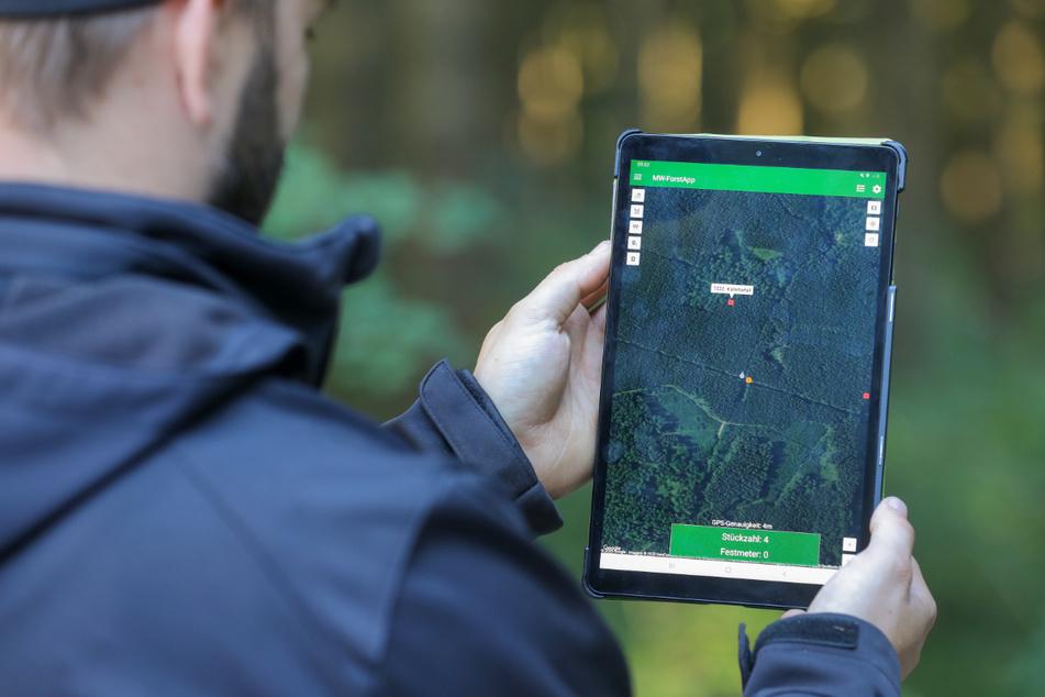 Mit App und Drohne: Kampf gegen den Borkenkäfer