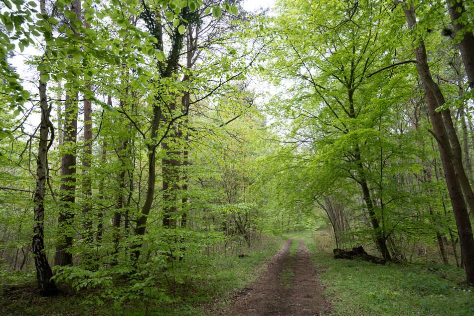 In Düsseldorf ist am Mittwoch (25. August) eine tote Frau (55) in einem Waldgebiet entdeckt worden. (Symbolbild)