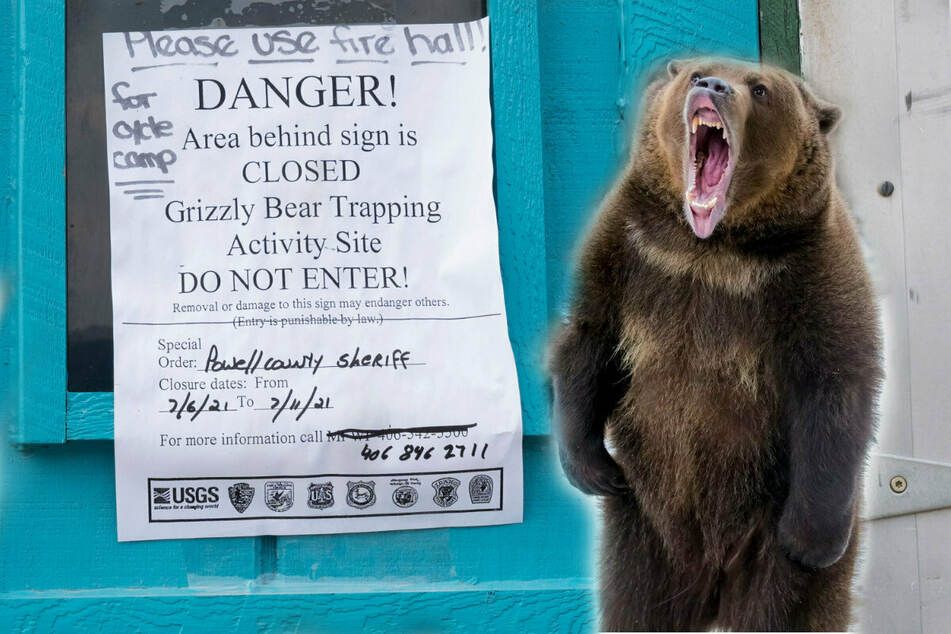 Grizzly bear that mauled a camping Montana woman to death is killed by officials