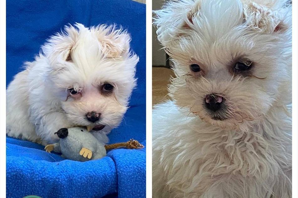 Diese beiden Hundewelpen haben ein schreckliches Schicksal hinter sich