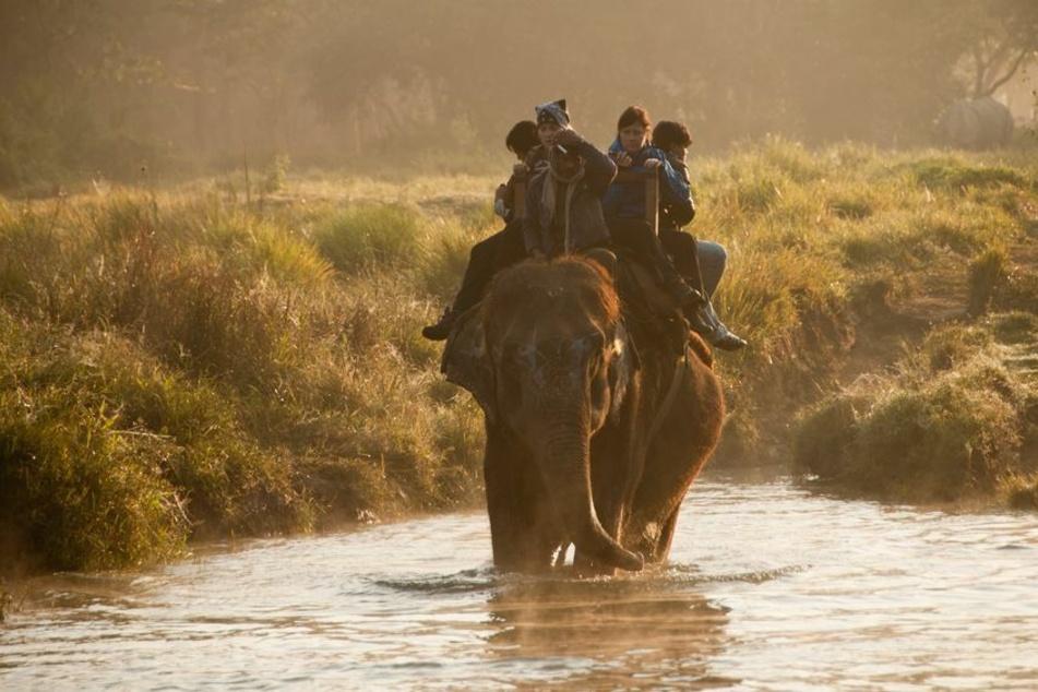 31-Jähriger stirbt beim Nashornzählen