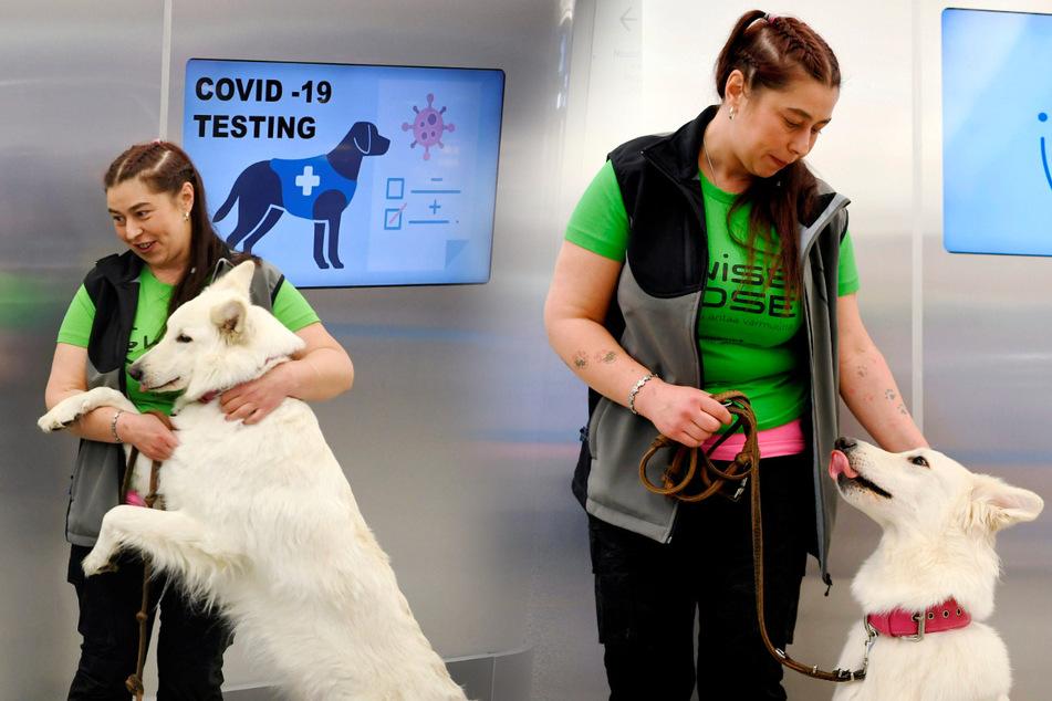 Sie erschnüffeln das Virus! Erste Corona-Hunde im Einsatz