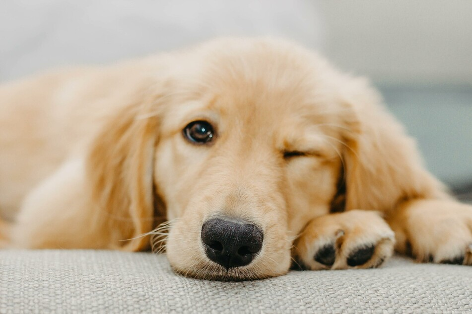 Mit der passenden Ausstattung hat der neue Hund alles, was er braucht, und kann sich entspannen.