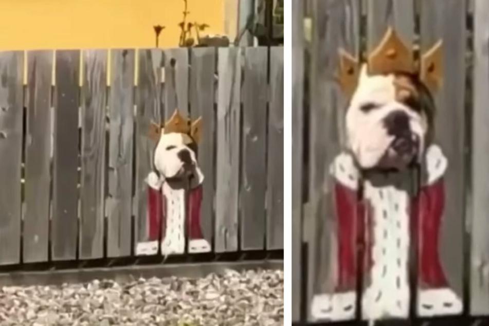 Hund hat kuriose Zaun-Vorliebe: Das bringt die Besitzer auf diese verrückte Idee