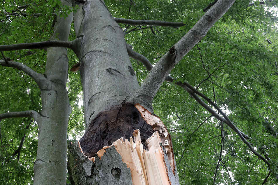 A massive tree limb fell on picnickers, leaving one dead and two injured (stock image).