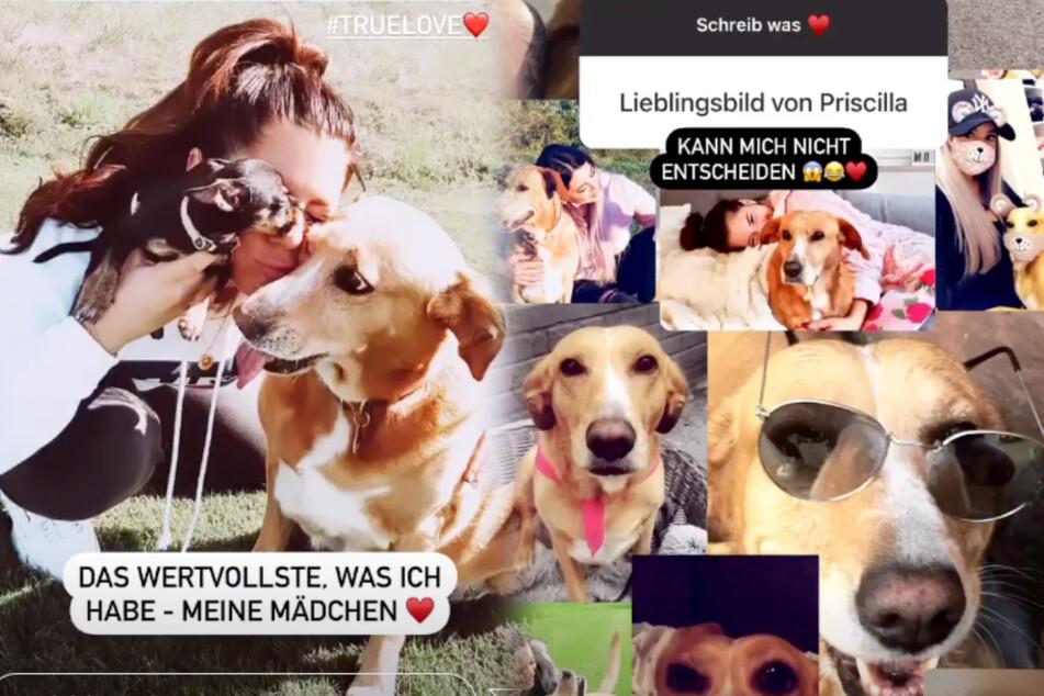 In ihrer Instagram-Story drehte sich ein großer Teil um Hündin Priscilla. (Screenshot)