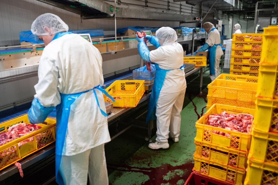 In einem Schlachthof in Schleswig-Holstein sind zahlreiche Mitarbeiter mit dem Coronavirus infiziert. (Symbolbild)
