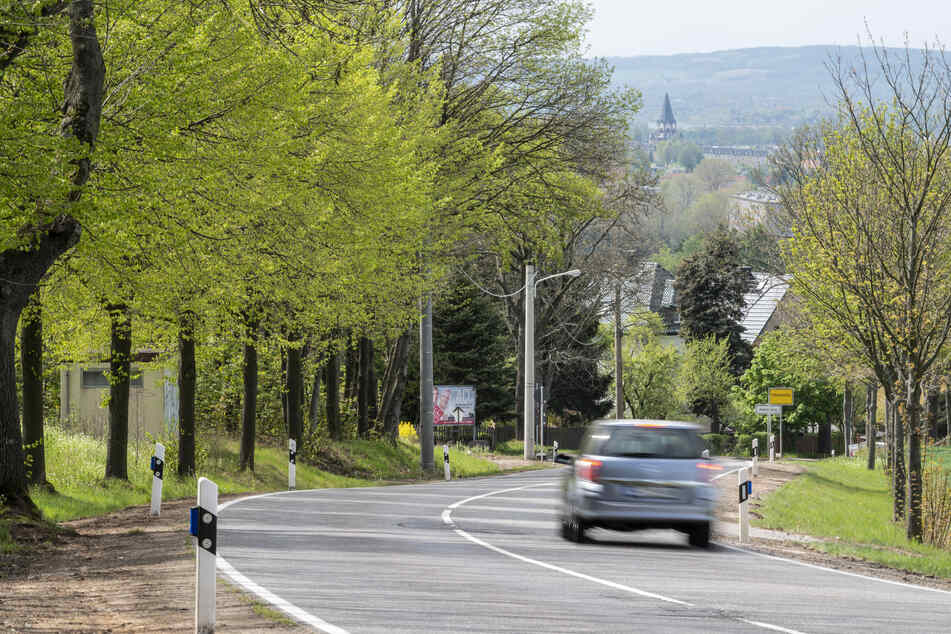 Die Erde von 33.000 Straßenrand-Bäumen in Chemnitz ist hart, trocken und wasserundurchlässig.