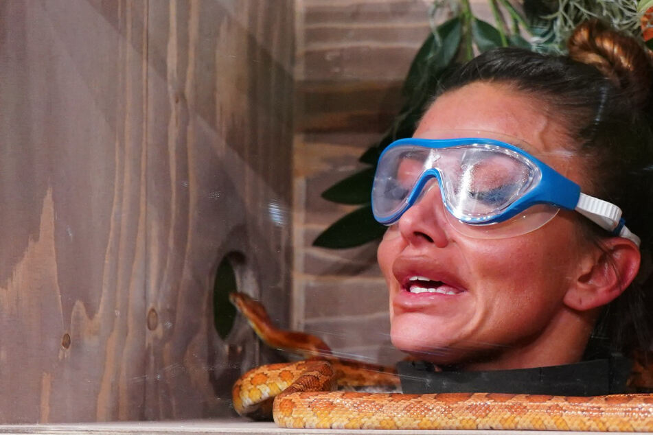 """Dschungelshow, Tag 7: """"98 Prozent der Reality-Stars sind geistig unterbewandert"""""""