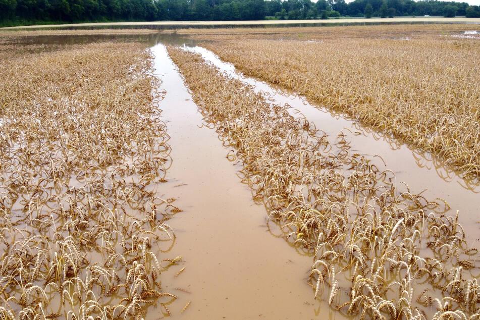 Unter anderen bei Erftstadt und Euskirchen hat der Starkregen Felder unter Wasser gesetzt.