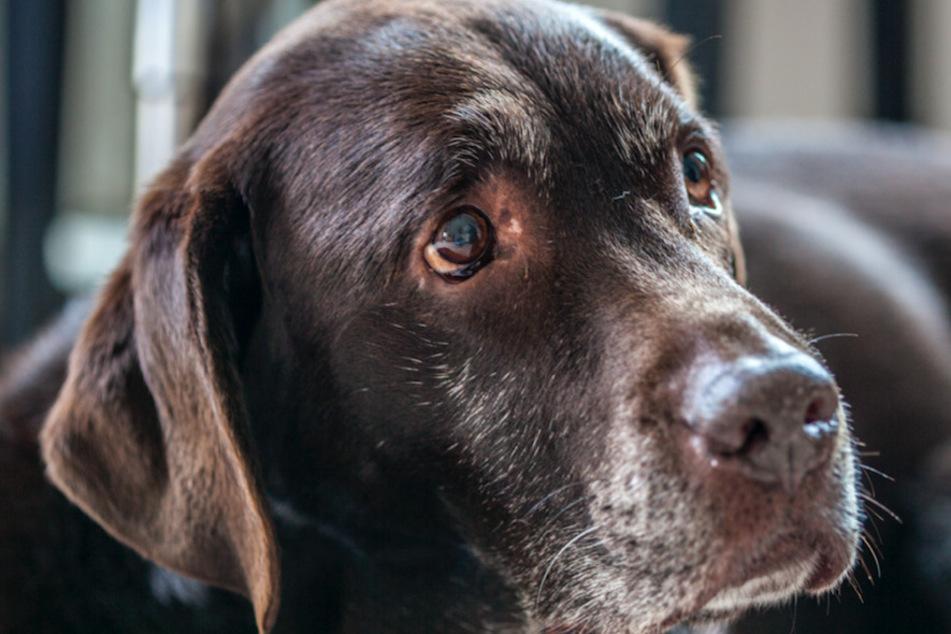 """Hund erkrankt? So erkennst Du, ob Dein Haustier am """"Vestibularsyndrom"""" leidet"""