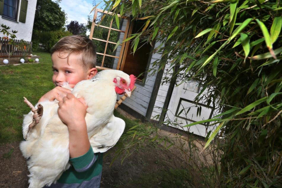 Moritz hält im Garten seiner Eltern eines ihrer Hühner in seinen Armen.