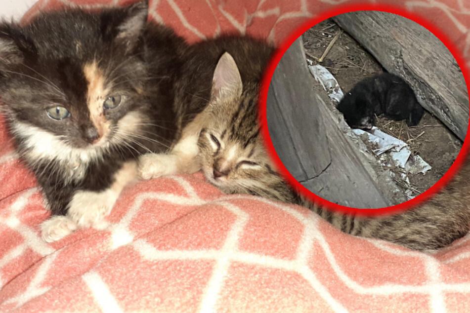 Kinder finden Katzenbaby und halten es für tot, doch dann geschieht ein Weihnachts-Wunder