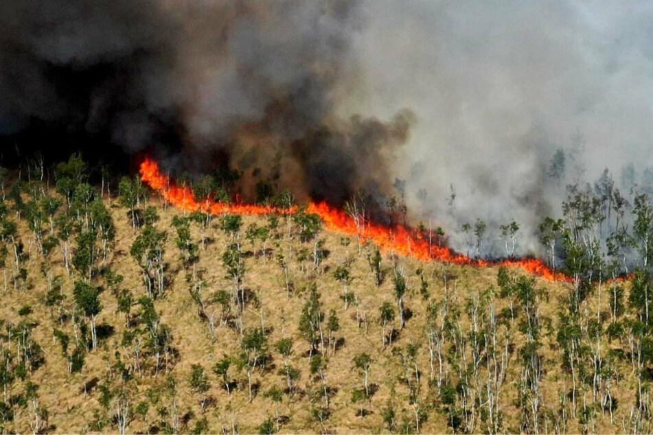 """Moorgebiet """"Loben"""" steht in Flammen: Großeinsatz der Feuerwehr"""