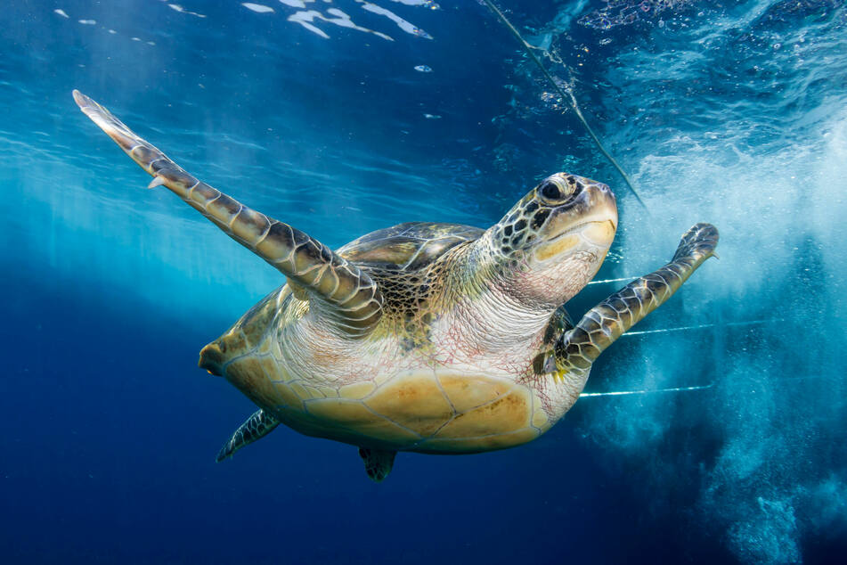 Chilled sea turtles in Texas get some help from SpaceX