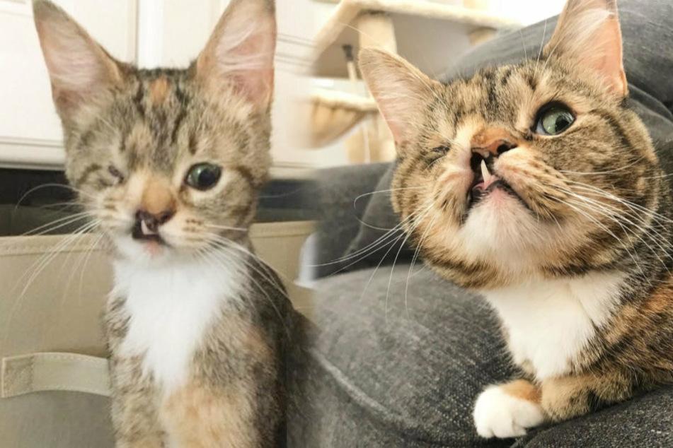 Einäugige Katze mit schiefem Zahn begeistert User weltweit