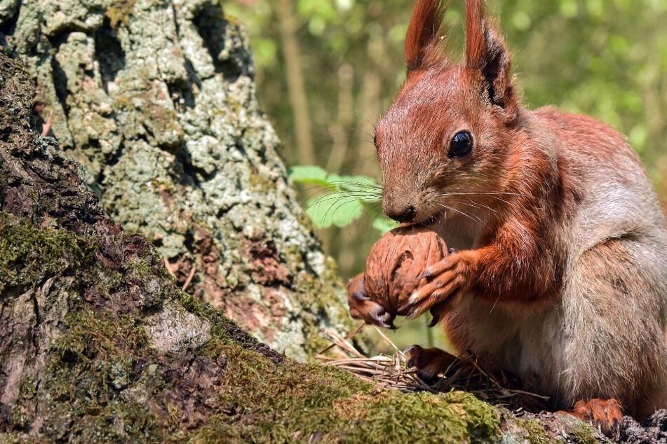 Für die Kunst: Aufgehängte Eichhörnchen schockieren Passanten