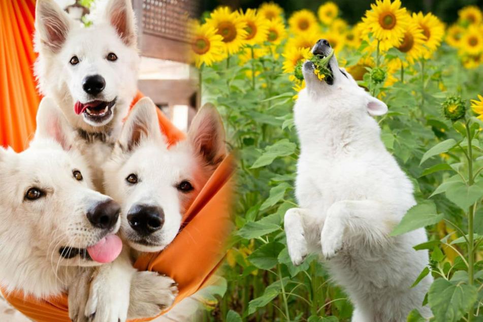 How cute! Everyone loves the three fur balls.